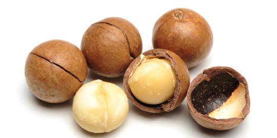 dahlan-tandingi-almond-kacang-macadamia-ptpn-xii-siap-diekspor