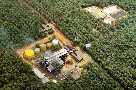 Dahlan Iskan - Pabrik Biodiesel